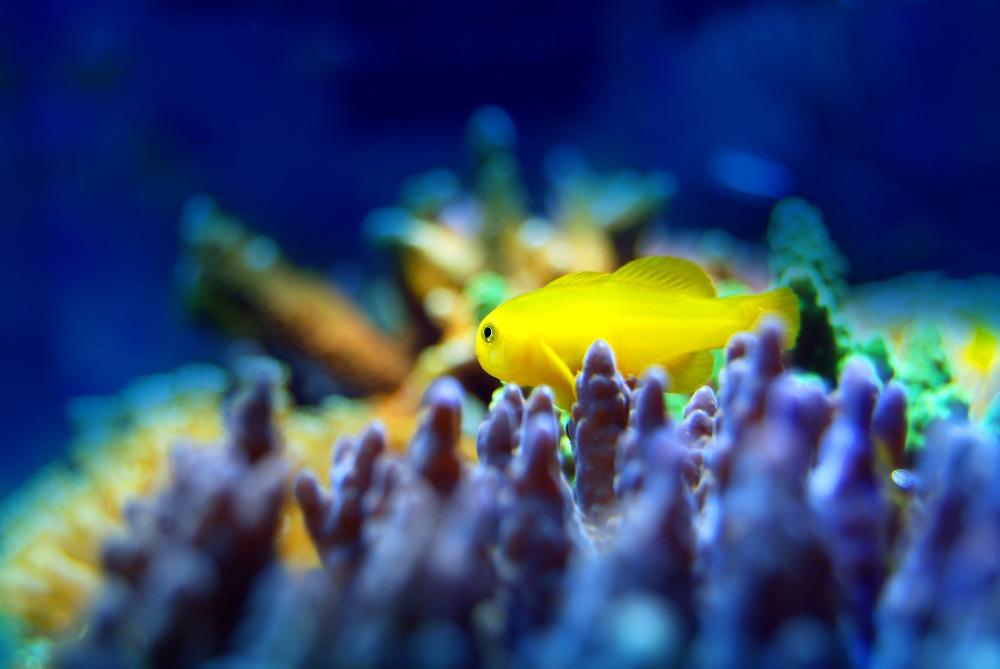 good starter fish for saltwater aquarium