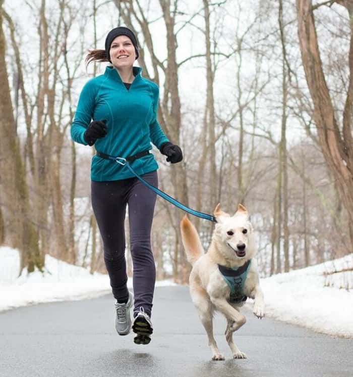 good2go active running lead for dogs