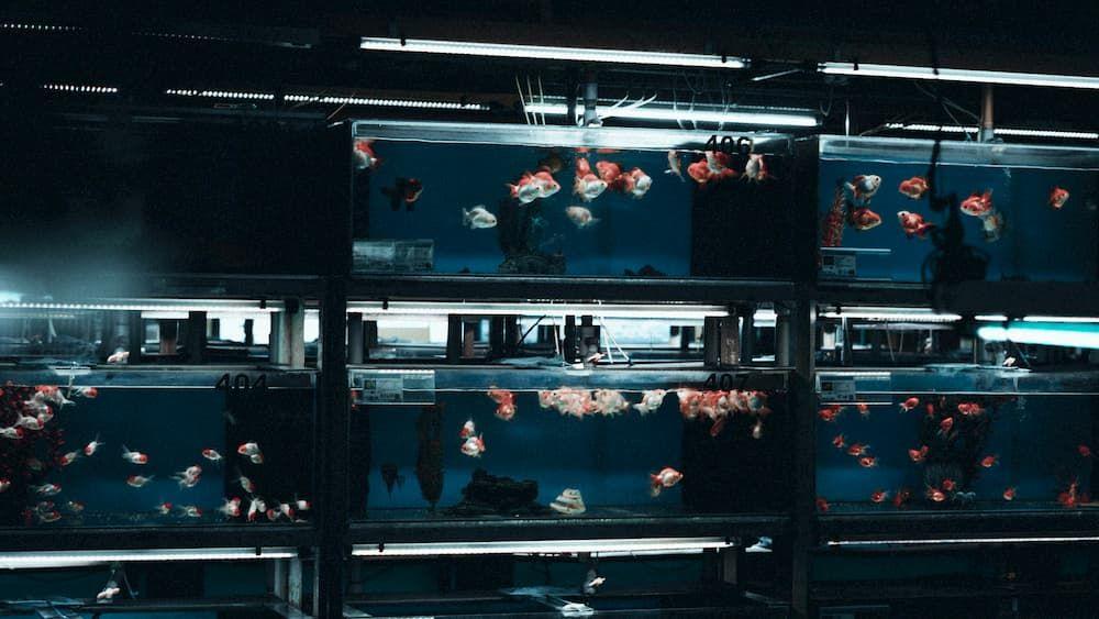 home aquarium glass vs acrylic