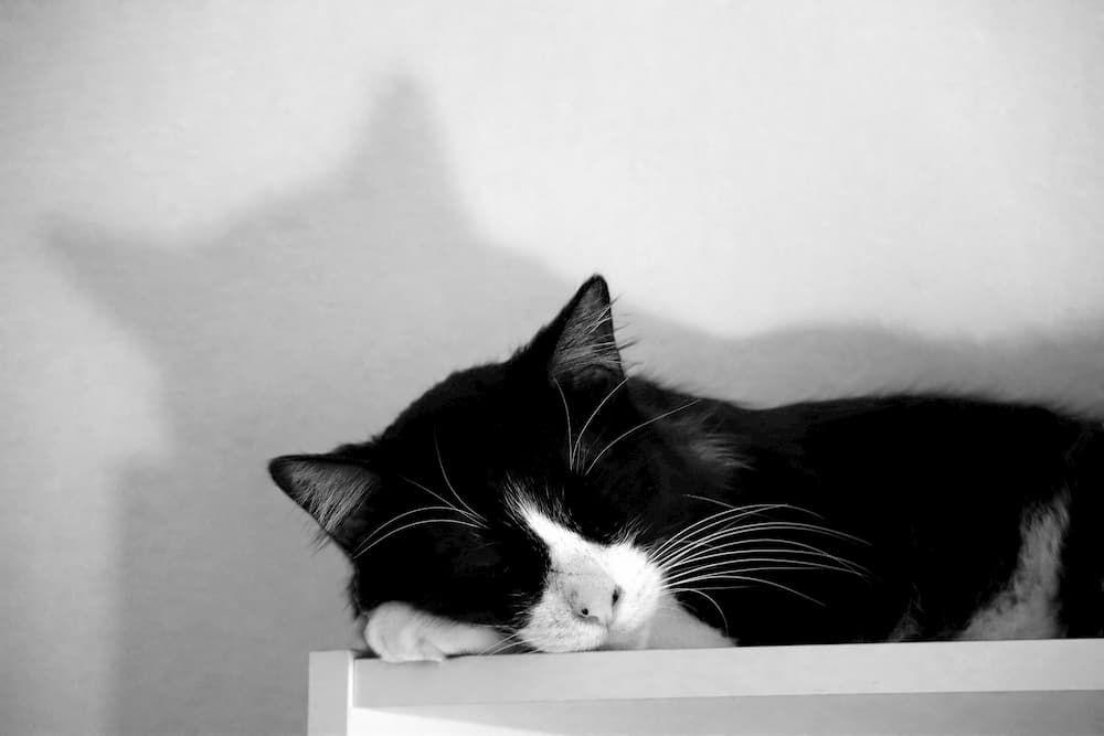 how big should be cat litter box furniture