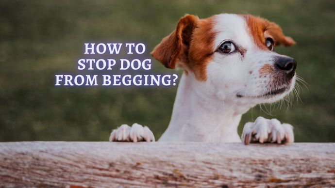 how can i stop my dog from begging