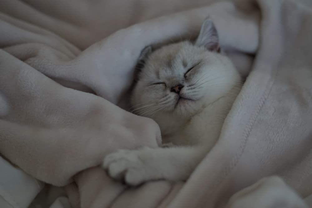how do you calm down a hyper kitten