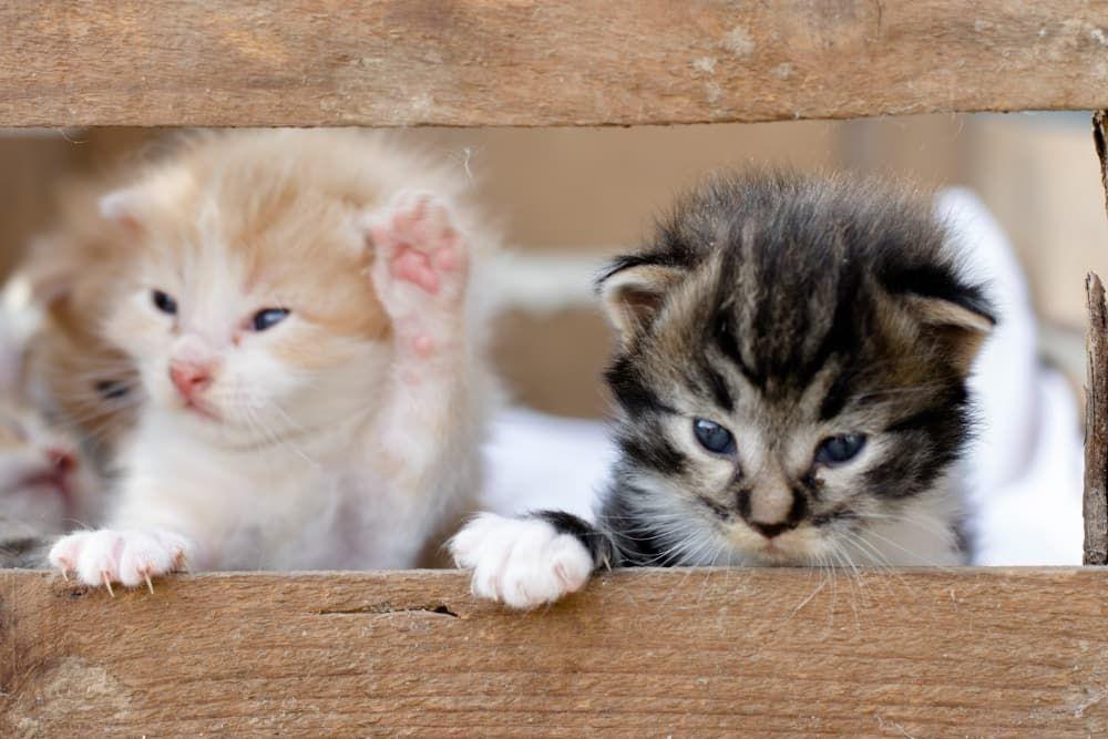 how do you take care of abandoned kittens