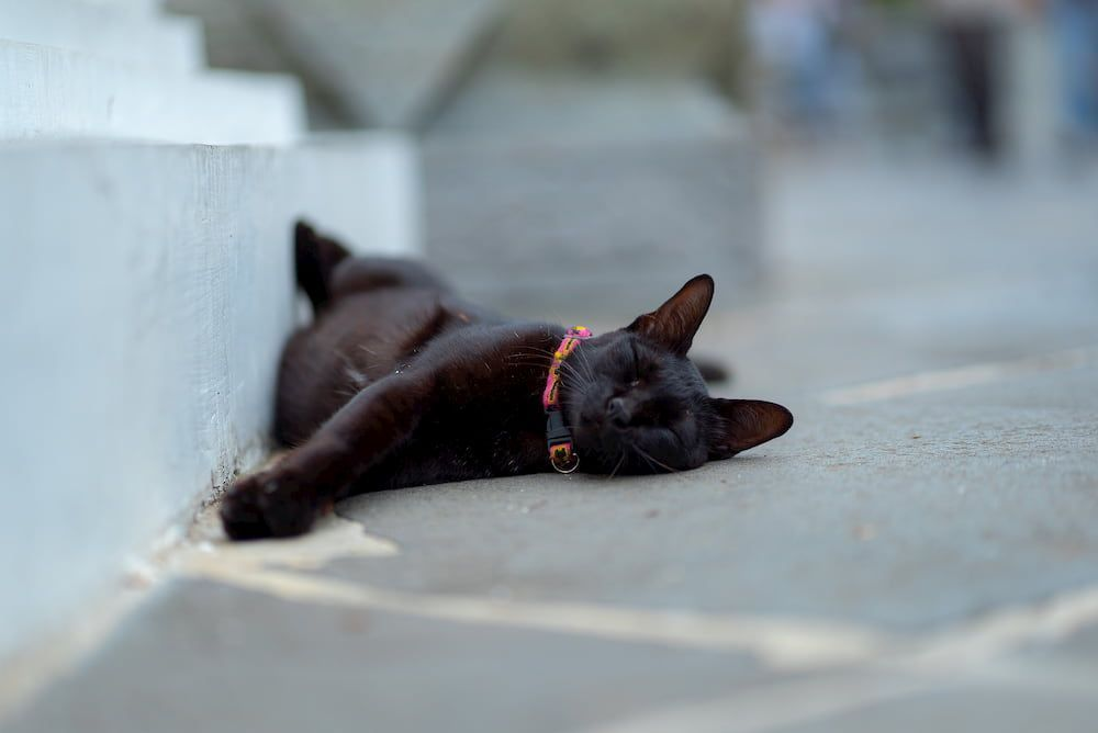 how long do cat tracker batteries last