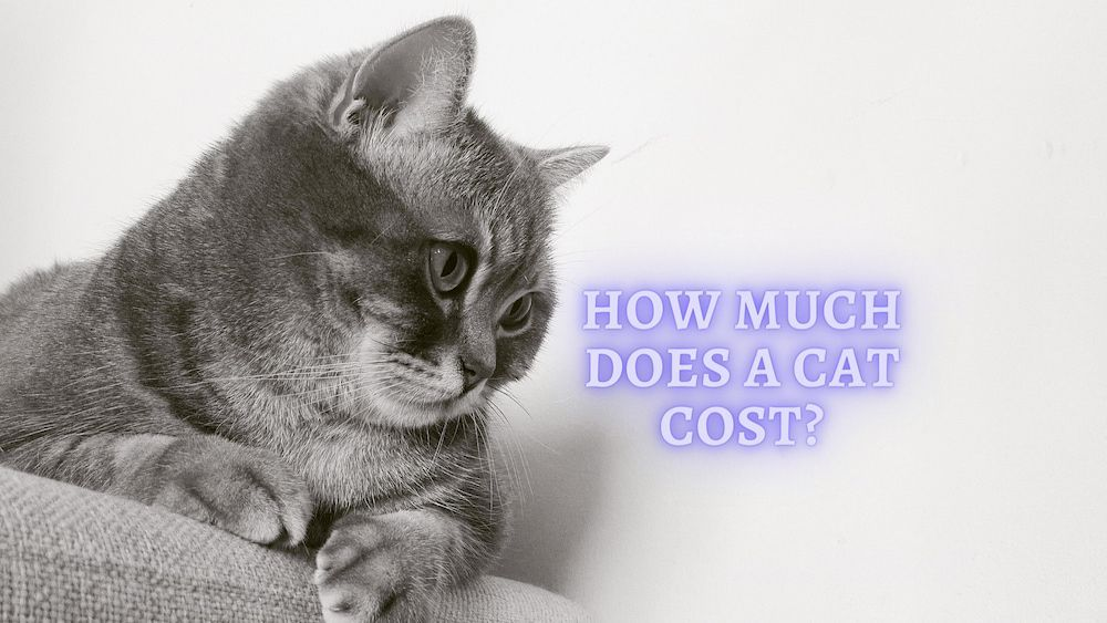 how much does it cost to have a cat