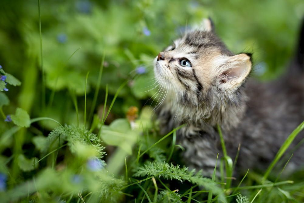 how much dry food should i feed kitten
