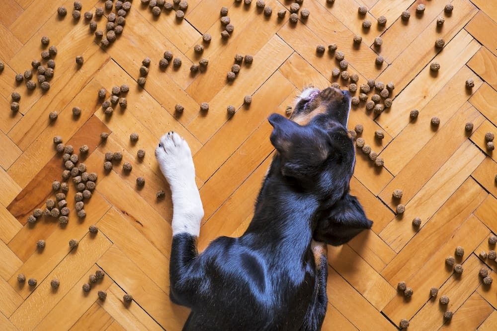 how much dry food should i feed my dog