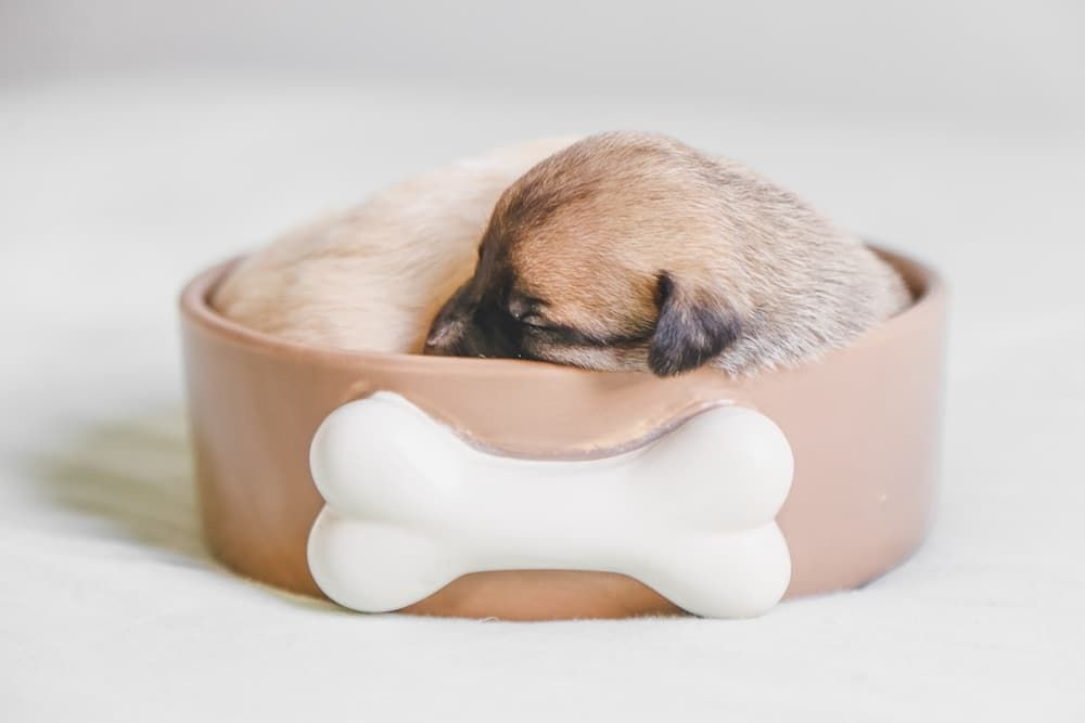 how much to feed a puppy based on weight