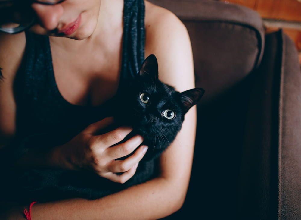 how often do cats need checkups