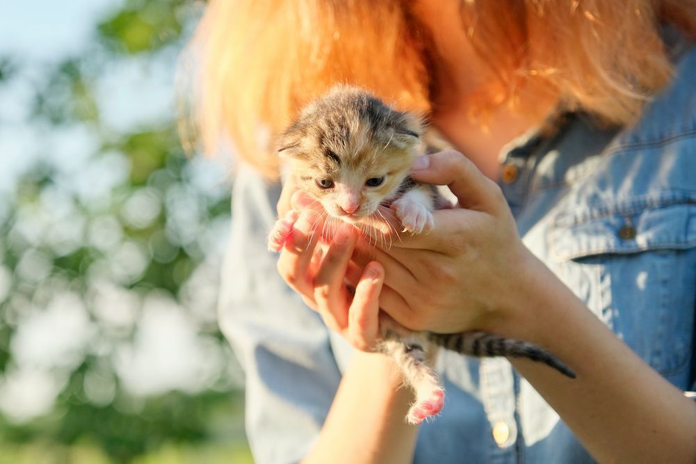 how often to feed kittens
