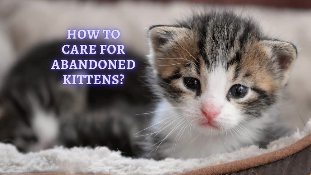 how to care for abandoned kitten