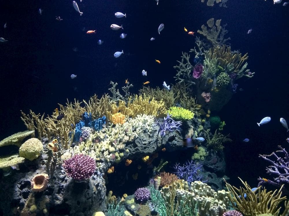 how to care for saltwater aquarium