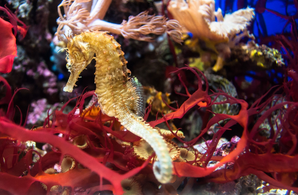 how to care for seahorse