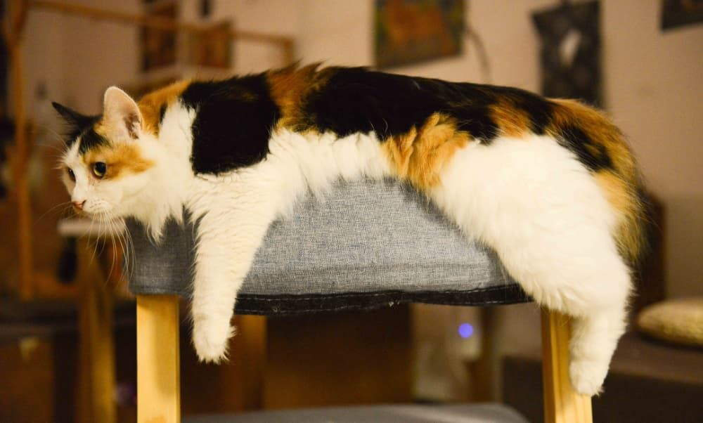 how to choose best cat tree