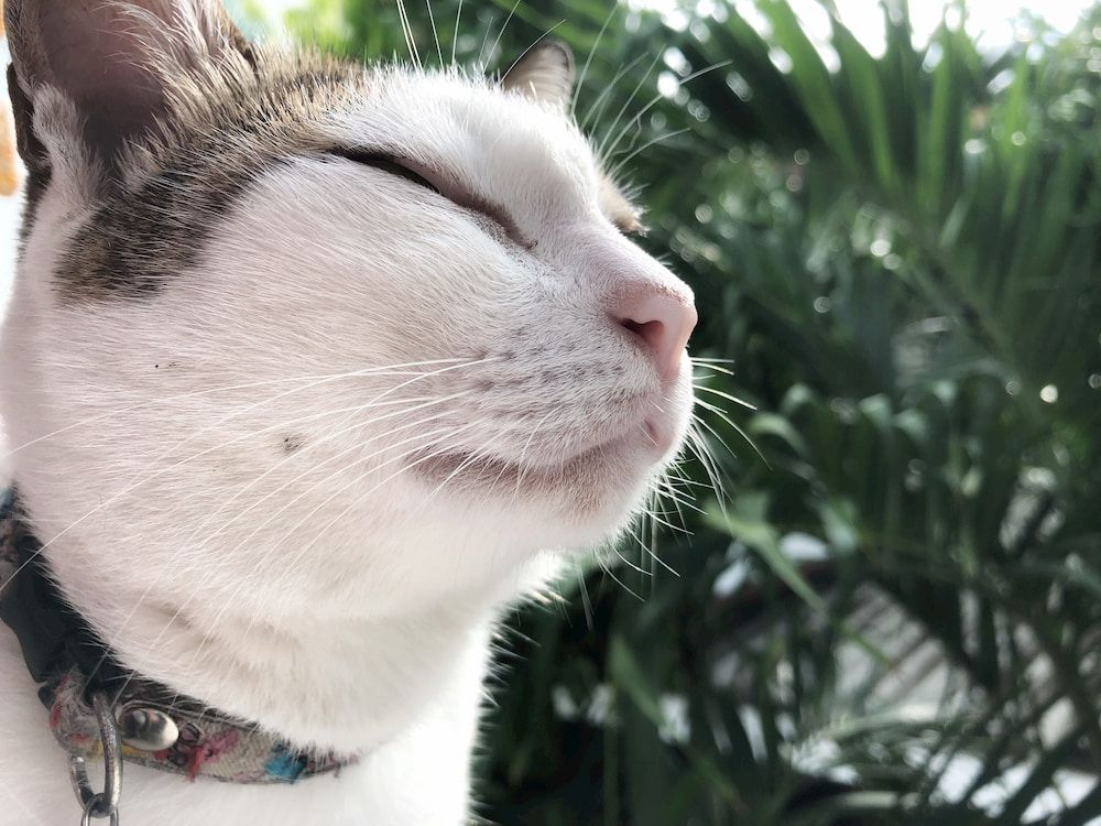 how to choose best gps tracker for my cat