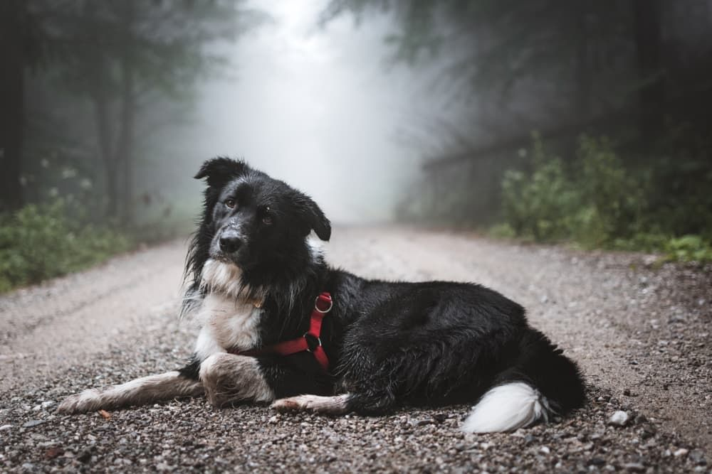 how to choose best muzzle for my dog