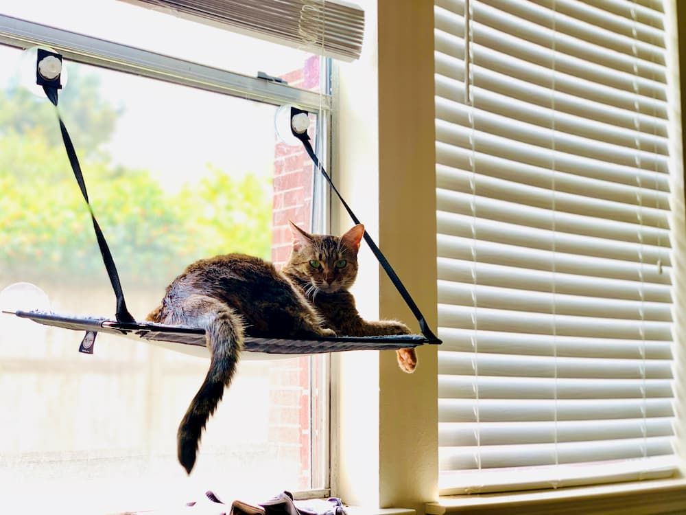 how to choose cat window perch