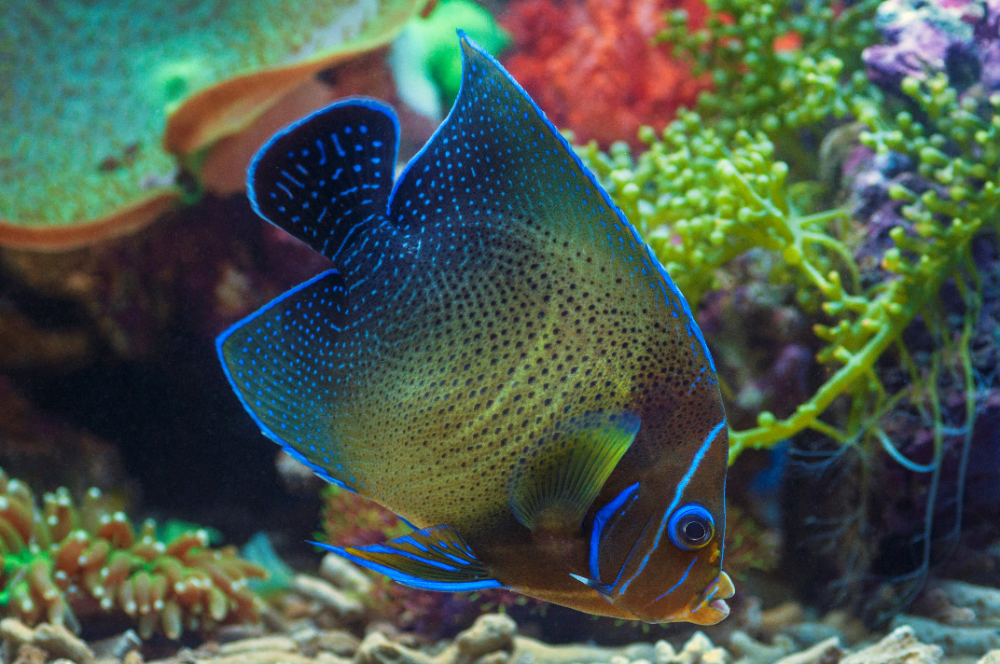how to choose fish for a saltwater aquarium