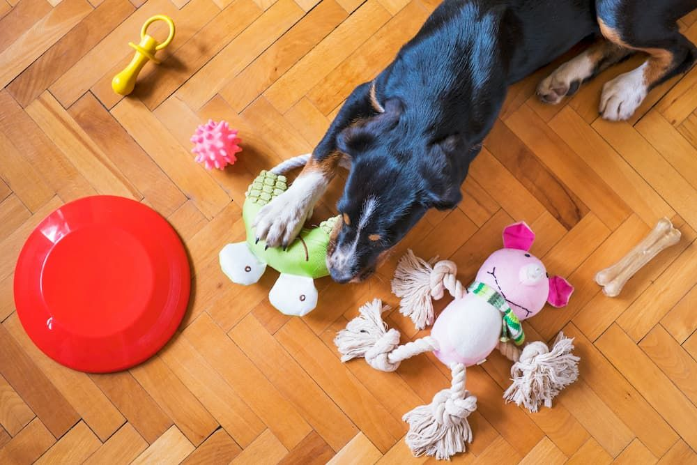 how to choose the right interactive toy for my dog