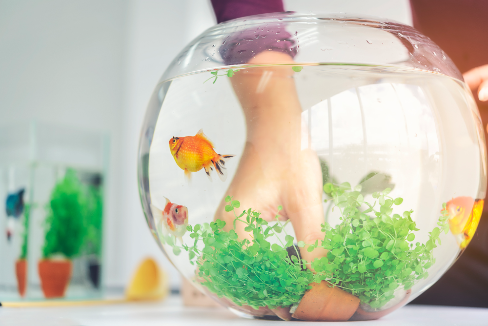 how to clean a freshwater fish tank