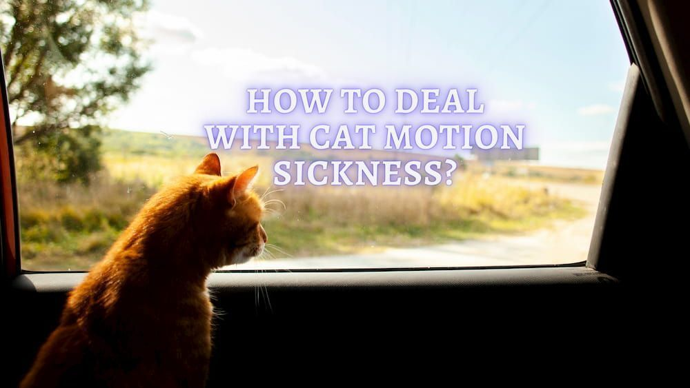 how to deal with cat motion sickness