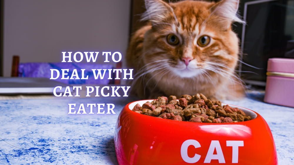 how to deal with cat picky eater