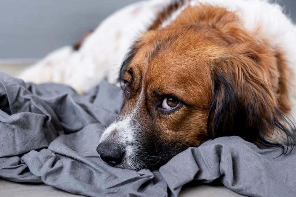 how to deal with pet loss