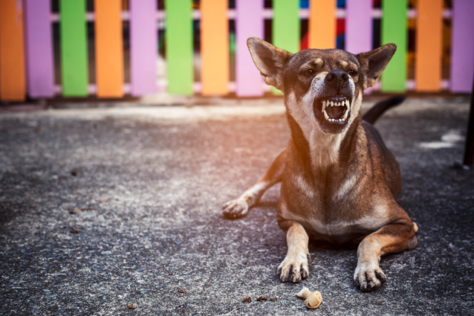 How to Deal with Aggressive Dogs the Right Way: Signs and Prevention
