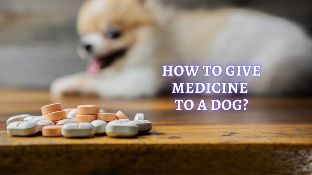 how to give medicine to a dog