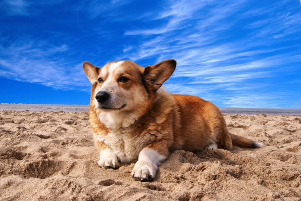 how to help my dog with skin allergy