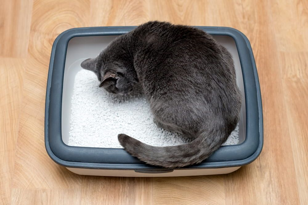 how to keep cat litter box clean