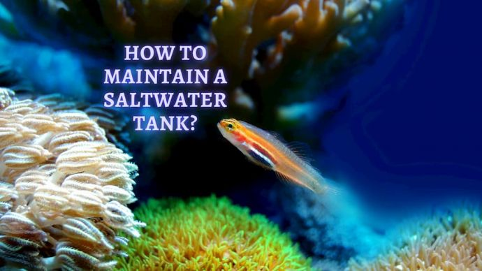 how to maintain a saltwater tank