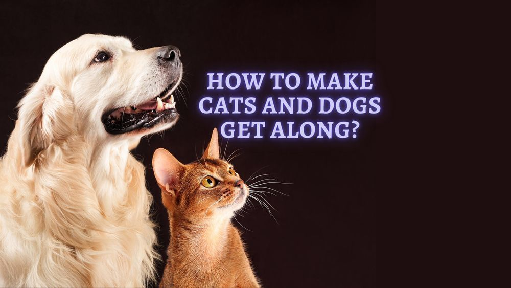how to make cats and dogs get along