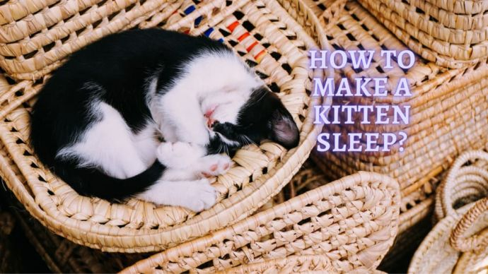 how to make kitten sleep at night