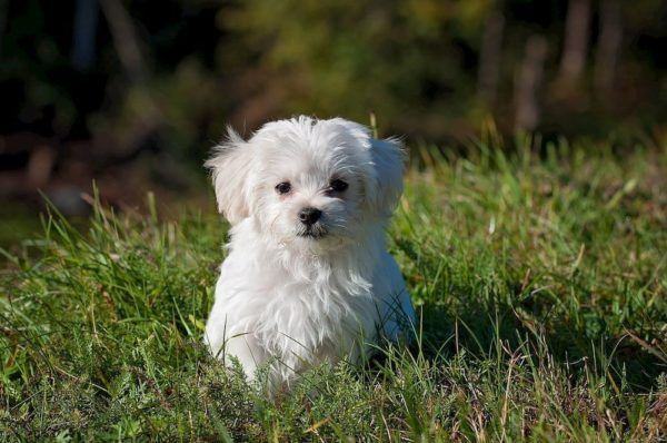 how to manage allergies in dogs