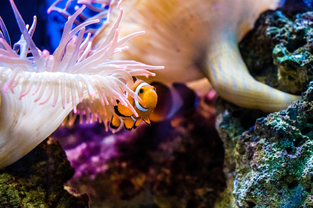 how to mix saltwater for an aquarium