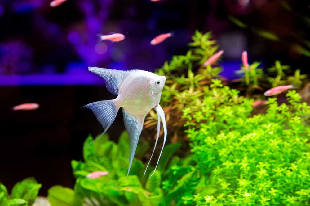 how to mix saltwater for aquarium