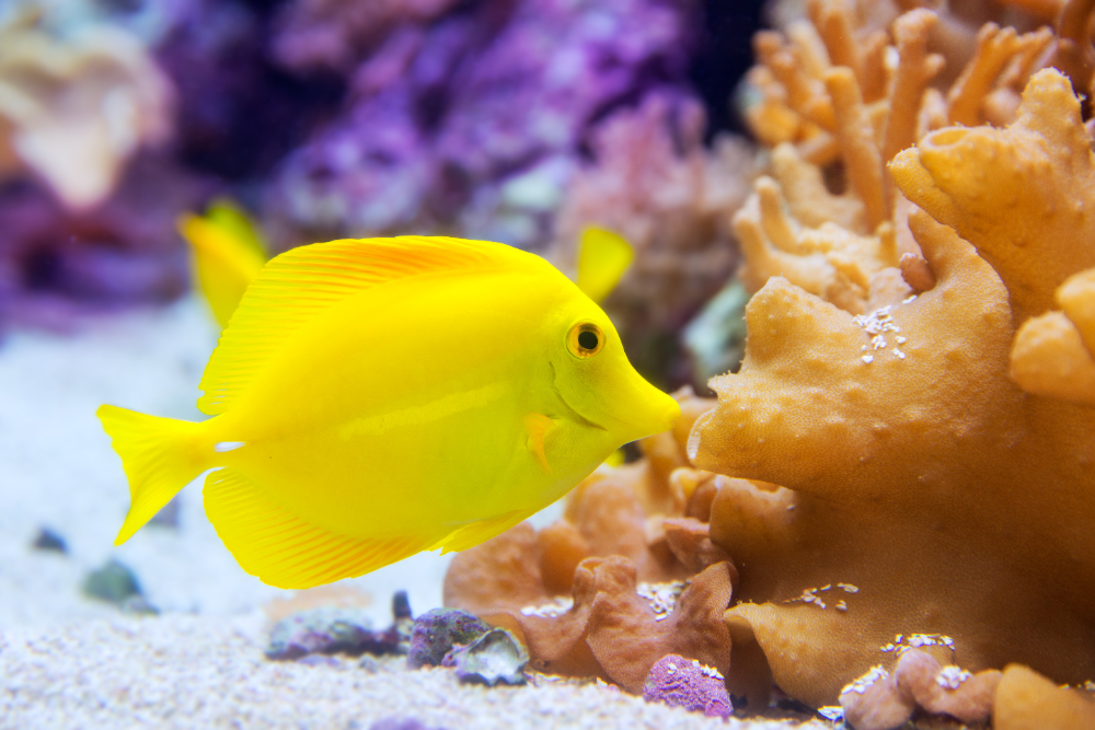 how to mix saltwater for aquariums