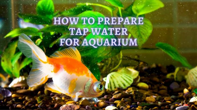 how to prepare water for aquarium