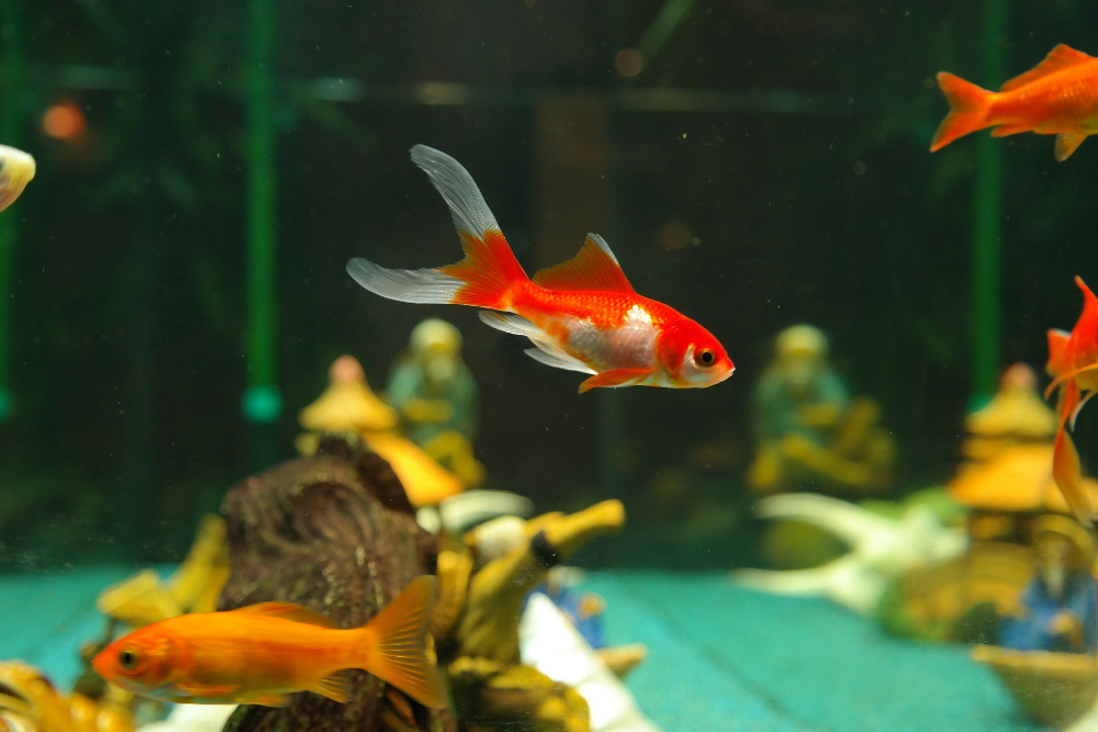 how to reduce phosphates in a saltwater aquarium