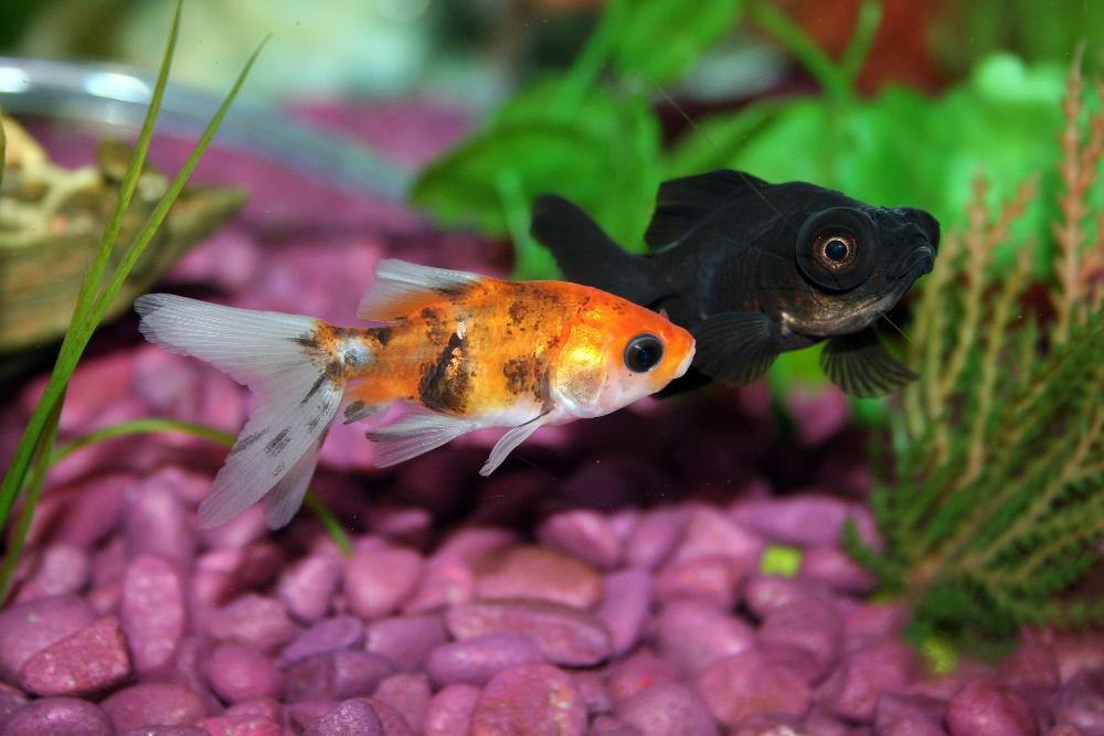how to reduce phosphates in aquarium