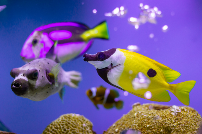How to Reduce Phosphates in a Saltwater Aquarium