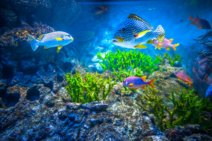 How to Start a Saltwater Aquarium
