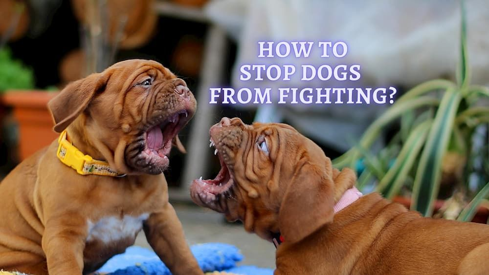 how to stop dogs from fighting with each other