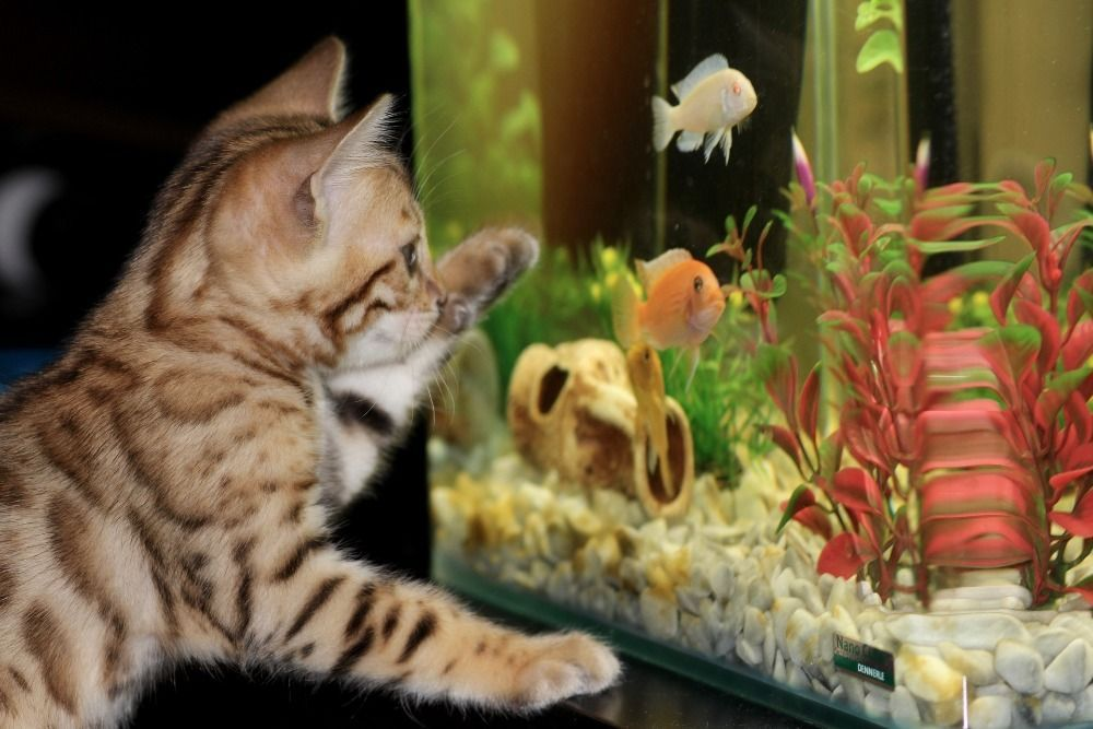 how to take care of a freshwater fish tank