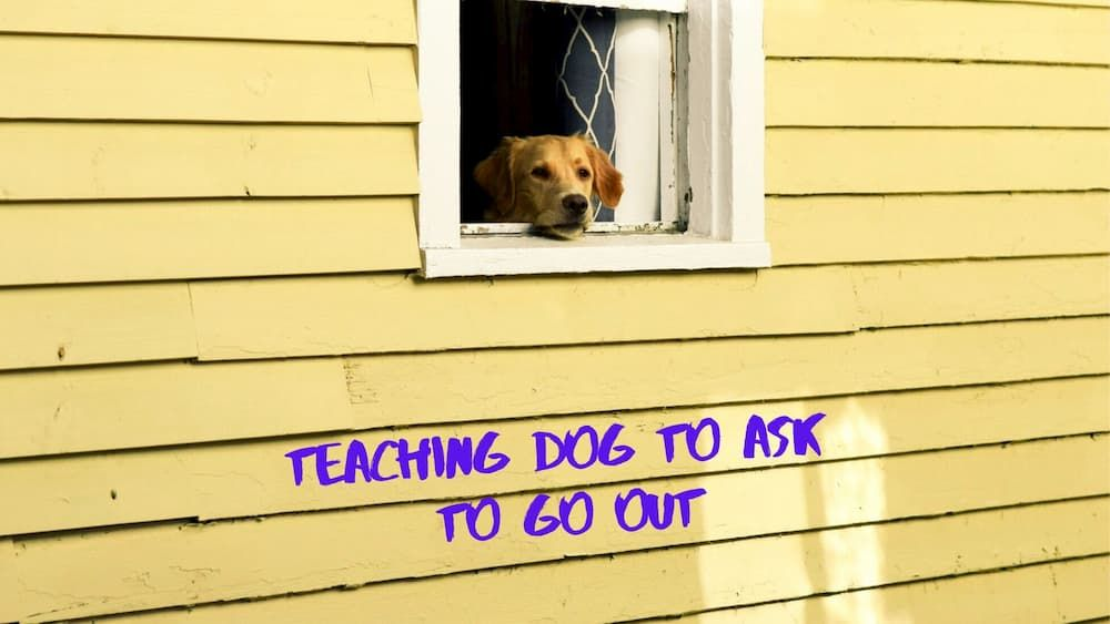 how to teach a dog to ask to go out