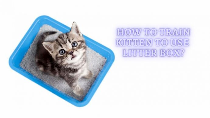how to train kitten to use the litter box