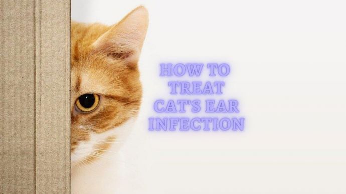Does my Cat have an Ear Infection?
