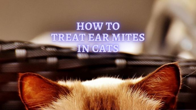 How to Treat Ear Mites in Cats
