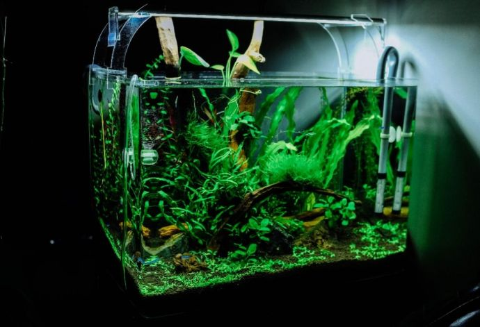 What is a good Ammonia level for Freshwater Fish?